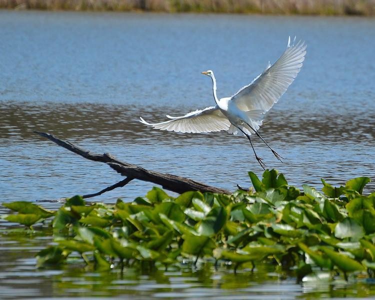 Heron Landing Zone