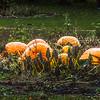 Large Pumpkins Carver County