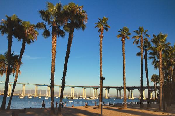 Coronado Bay Bridge Palms