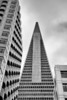 Transamerica Building Squeeze - Black and White