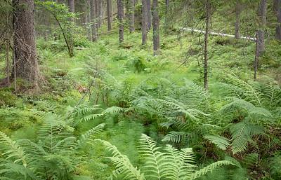Torsgårdin metsä.