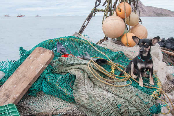 Trawler dog