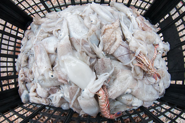 Small octopus and a non-target species of shrimp are kept aside for local consumption