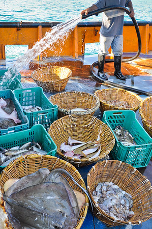 Some bycatch animals don't have any chance for survival, no matter how miniscule.  Those with commercial value will be kept for onboard consumption or to be traded for goods and services from locals.  Large rays, guitarfish, crabs, triggerfish, and octopus are all retained, among others.