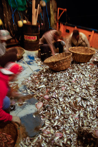 The crew sorting through the catch to separate out the shrimp