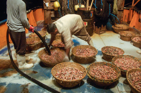 Rinsing the shrimp after sorting