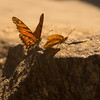 A Butterfly on Yelapa