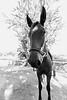 High key horse