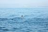 Stingray flying into Puerto Vallarta...