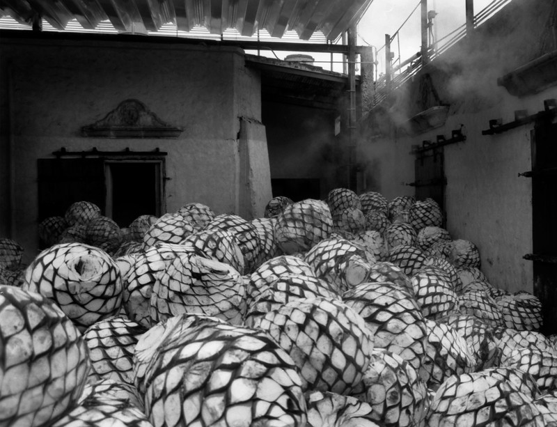 Making Tequila, Jose Cuervo factory, Tequila, Mexico - Mexico photography wall art