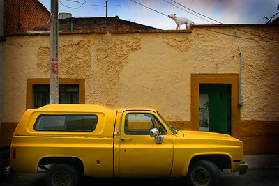 Pit Bull on Roof, Guadalajara, Mexico - Mexico photography wall art