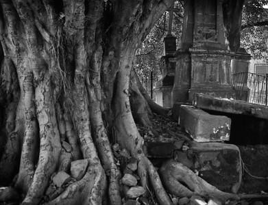 Vampire Grave, Guadalajara, Mexico - Mexico photography wall art