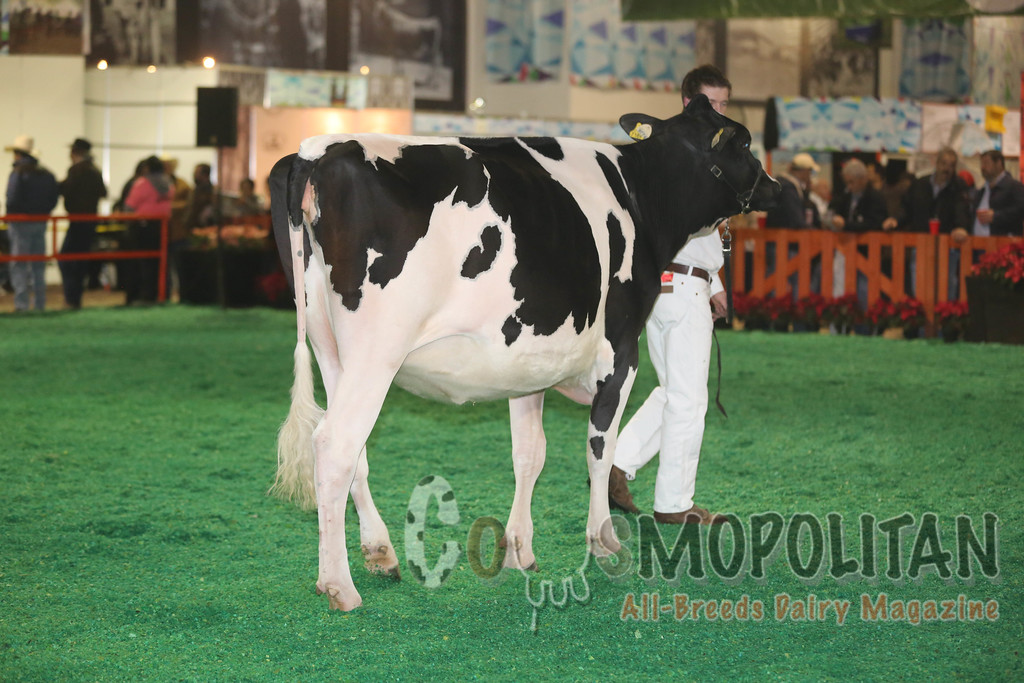 MexicoHolstein15_1E6A7951