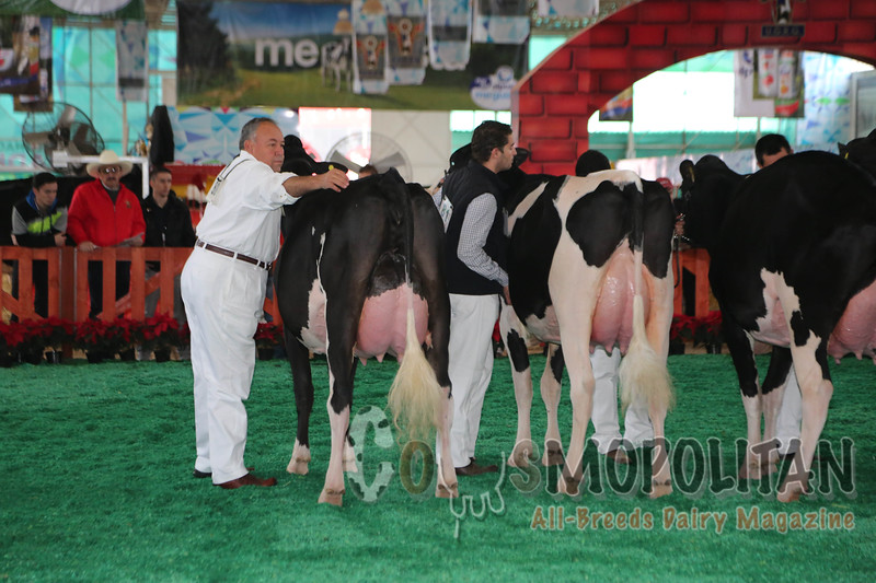 Mexico National Holstein 15