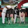 MexicoHolstein15_1E6A8078