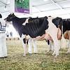 Mexico2017_Holstein-4036
