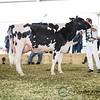 Mexico2017_Holstein-3926