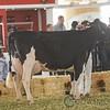 Mexico2017_Holstein-4423