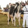 Mexico2017_Holstein-4363