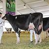 Mexico2017_Holstein-3744