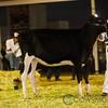Mexico2017_Holstein-2604