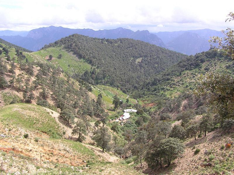 more La Cebolla