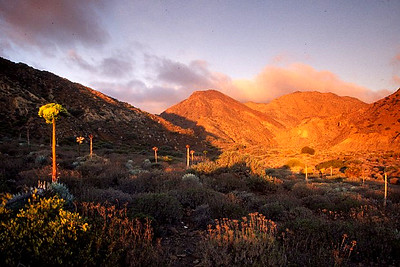 Cedros Island  Sunrise - Gran Canon