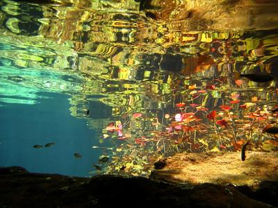 Cenotes 2008