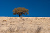 A lone tree in the countryside near Cuauhtemoc, Mexico.