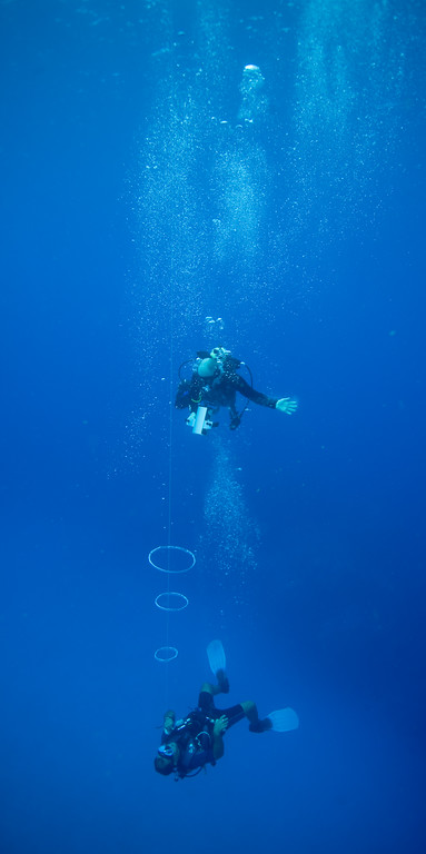 The dive master blew bubble rings for our amusement.