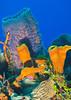 Sponges of Cozumel