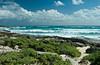 Coastal beach on the island of Cozumel, Mexico.