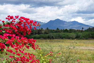 Red Bougainvillea and Nayarit Mountains, Mexico