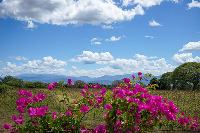 Bougainvillea and the Sierra Madre Occidental, Jalisco, Mexico