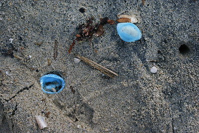 Blue Plastic Bottle Tops on Beach