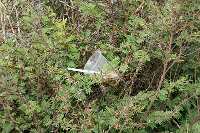 Plastic Cup and Straw in Bushes
