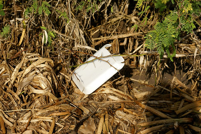 Styrofoam Plate Discarded at Beach Area, Mexico