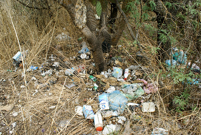 Trash Strewn Around Bushes, Mexico