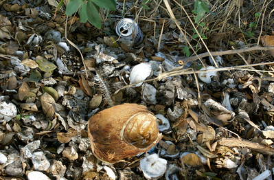 Clam Shells, Coconut Husk and Beer Can, Mexico