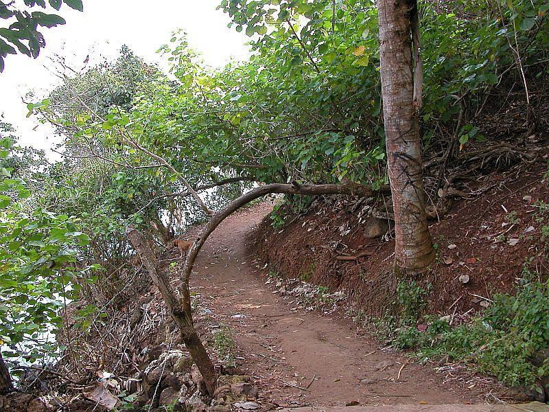 la jungla 1 - trail 2
