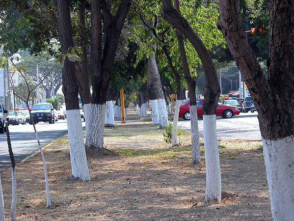 Colima street 2
