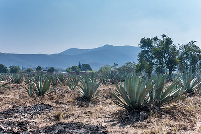 Agave, Mezcal, and Mountains