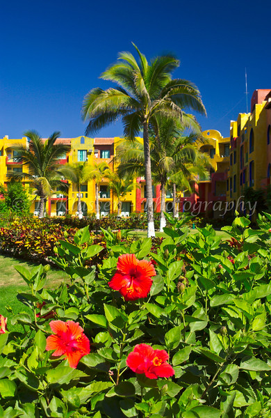 Red hibiscus flowers in the tropical garden at the Royal Decameron Resort in Puerto Vallarta, Mexico.