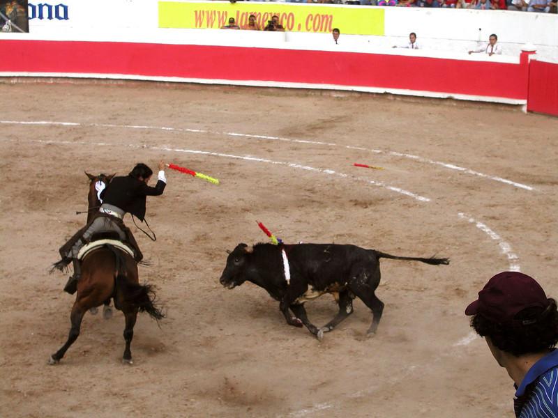 Smaller Bulls are More Agile