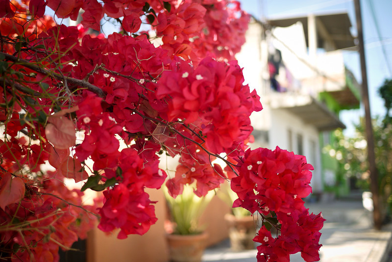 Beautiful bougainvillea hanging into the in San Pancho, Mexico.
