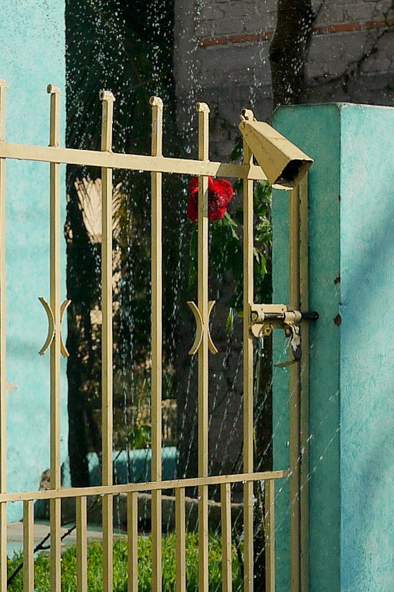A hose waters a lawn, a rose, and a cow bell in San Pancho, Mexico.