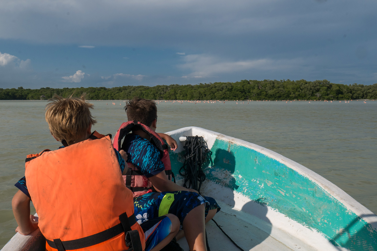 At the Celestun Biosphere Reserve in the Yucatan, Mexico