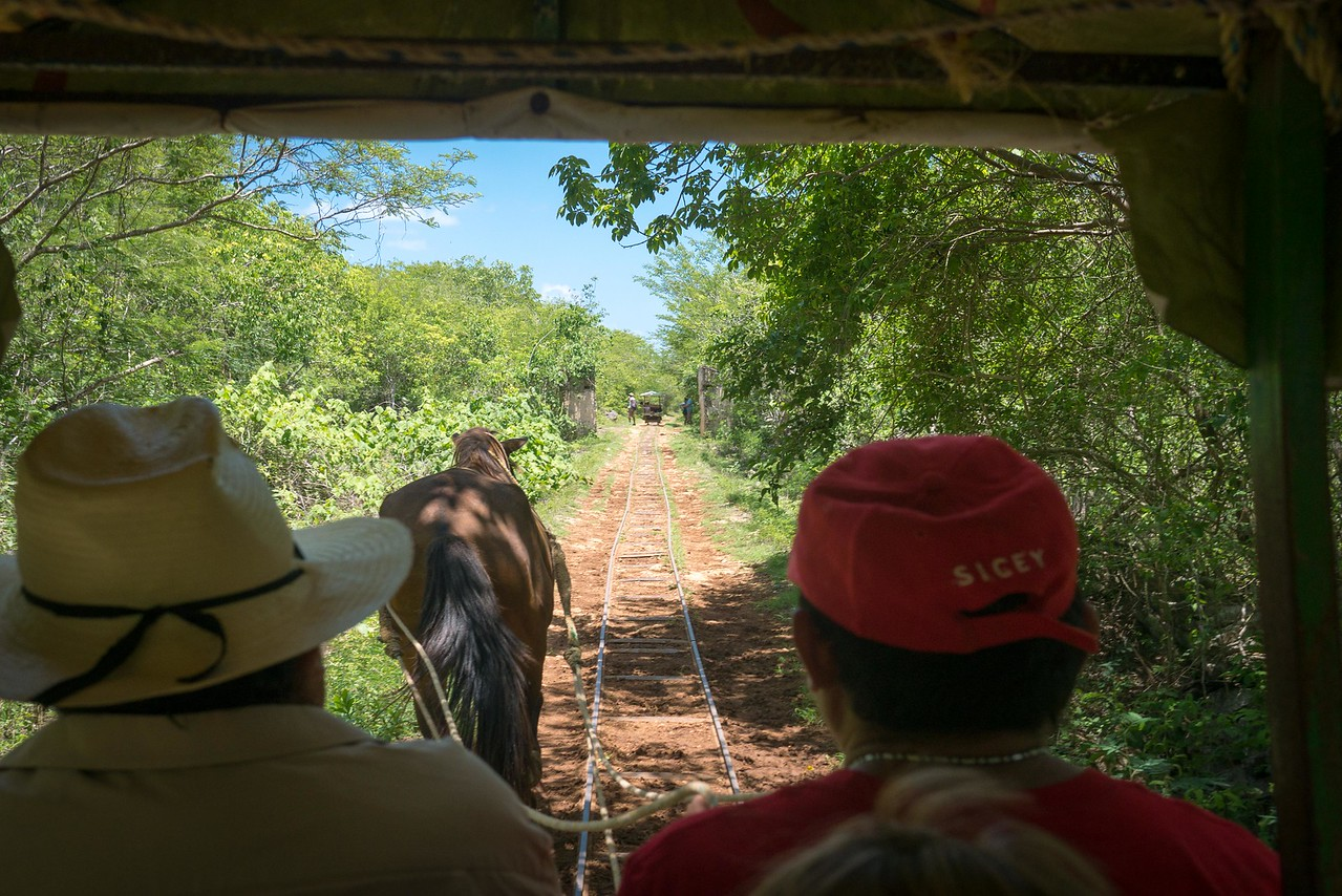 Riding the horse-drawn rail cart to the hidden cenotes of Cuzama.