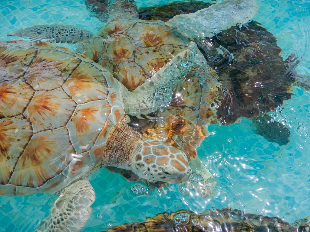 turtle shells on isla mujeres
