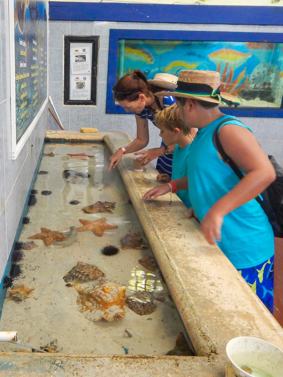 visiting isla mujeres turtle farm